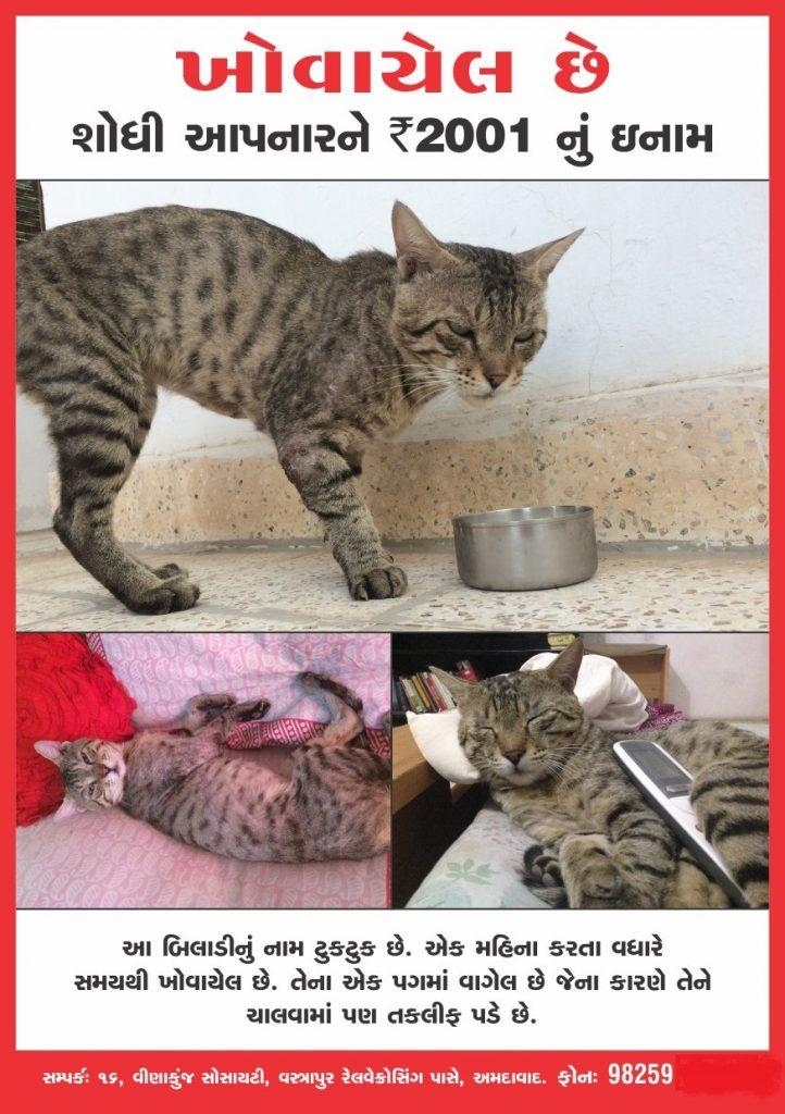 Cat From Ahmedabad Stray Cat