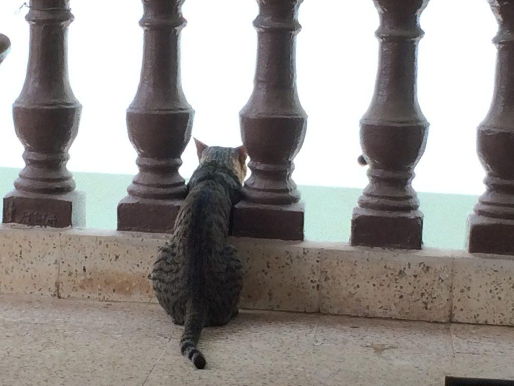 Tuk Tuk Cat Awaiting