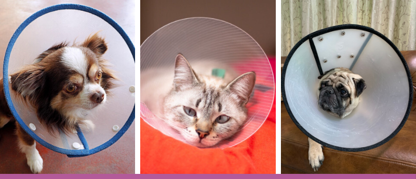Pet collar E-collar Cone of Shame Pet Cone Collar