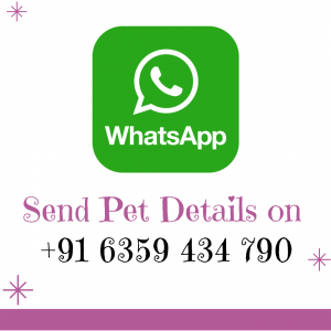 WhatsApp My Love My Pet