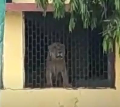 Lion Visit Una School