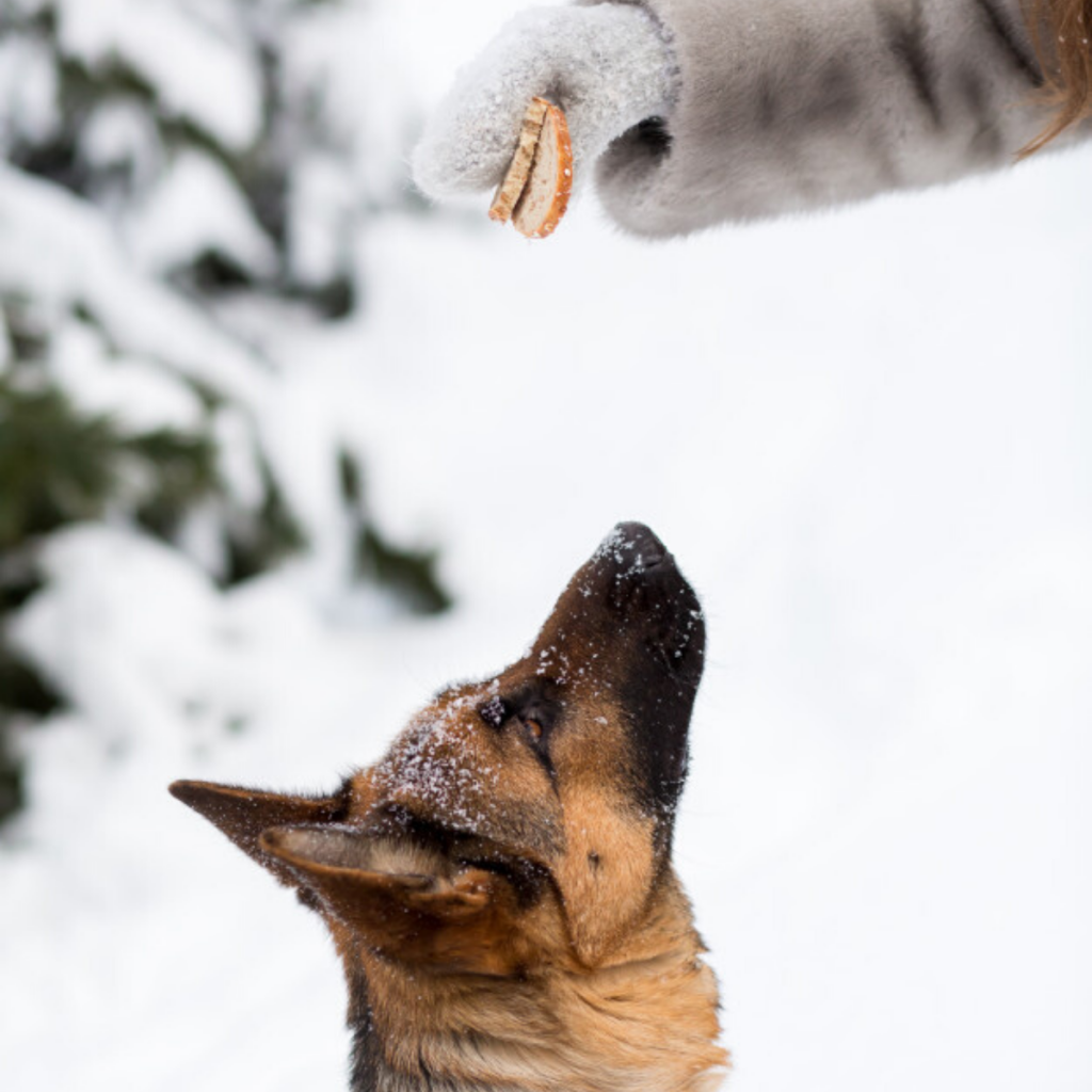 GSD with Treat