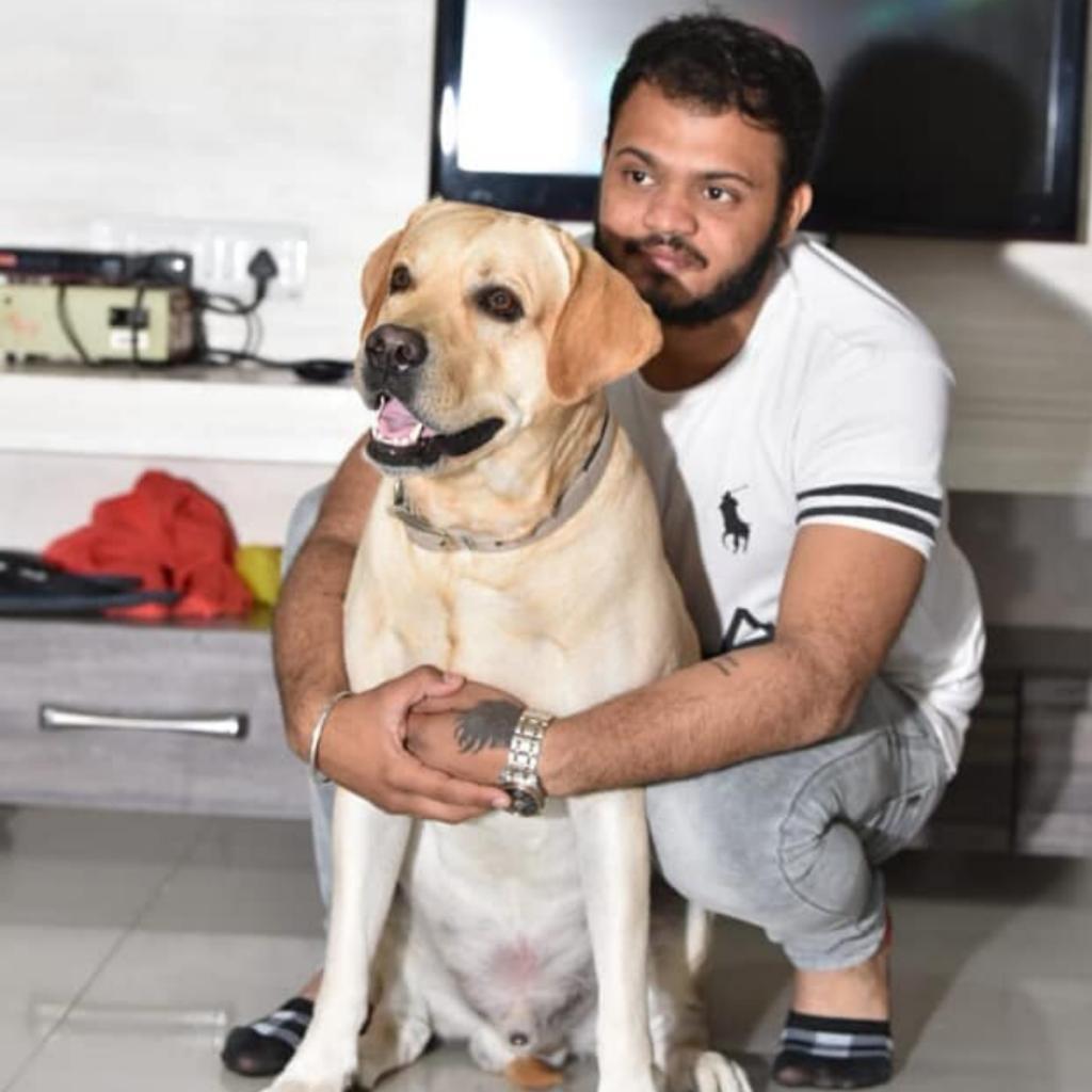 Labrador Retriever Dog Samy Ahmedabad