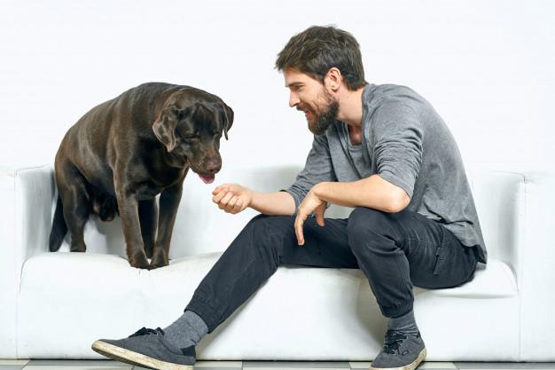 Labrador Dog Black Training