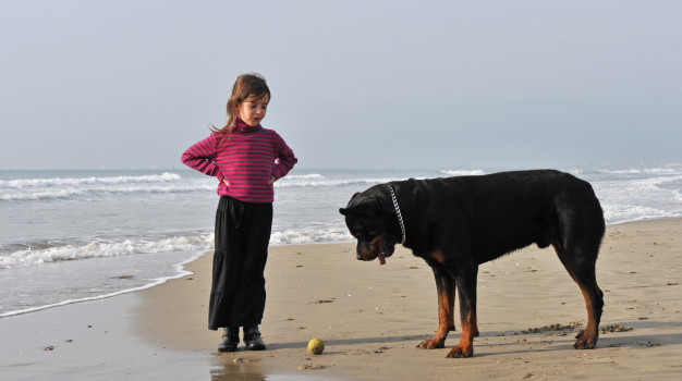 Rottweiler Training with Kid