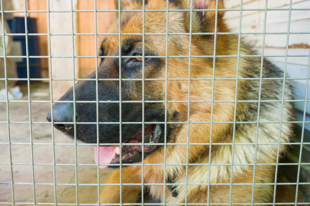 german shepherd locked cage