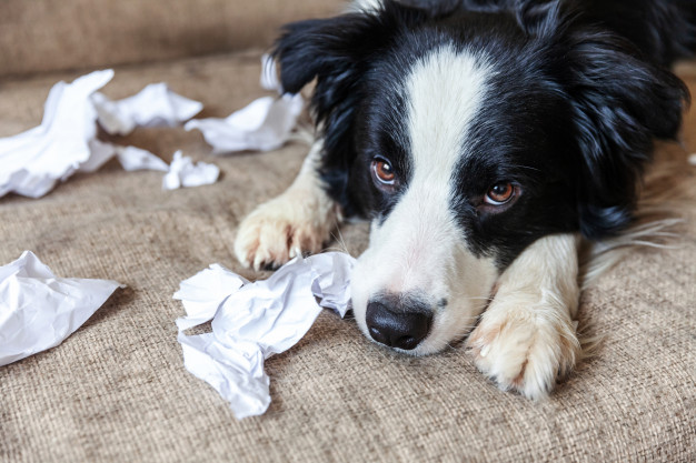 dog chewing and damaging my love my pet
